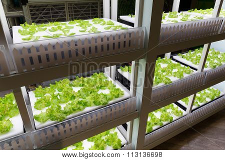 Hydroponics system in rack