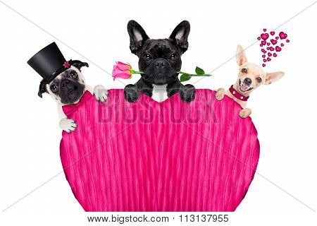 Valentines Day Row Of Dog