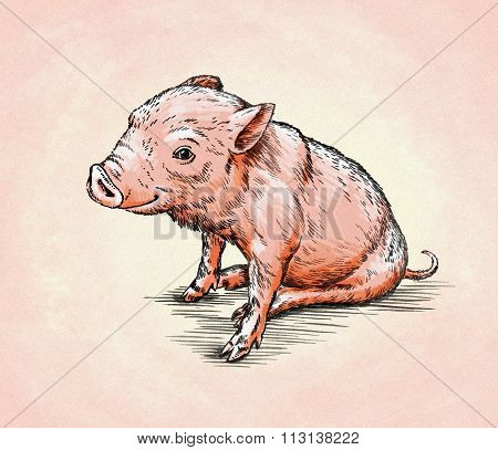 brush painting ink draw pig illustration