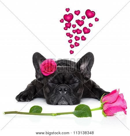 Valentines Love Sick Dog