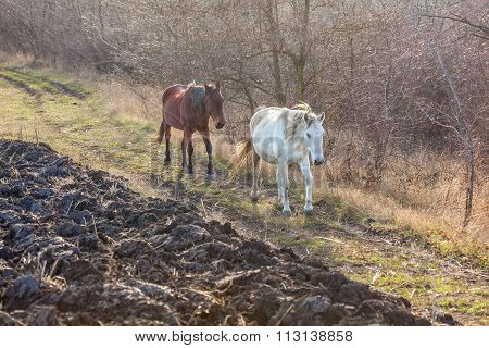 two horses near plowing field on the countryside