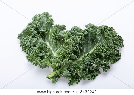 A healthy fresh curly kale isolated on white