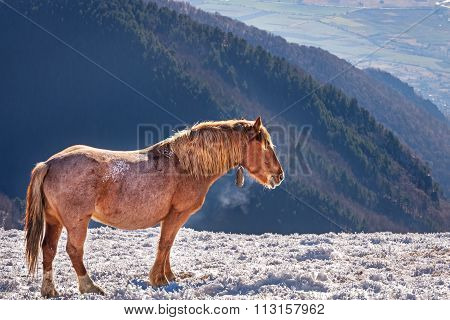 Horse In A Cold Winter Pasture.