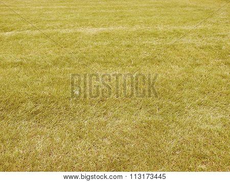 Retro Looking Grass Meadow