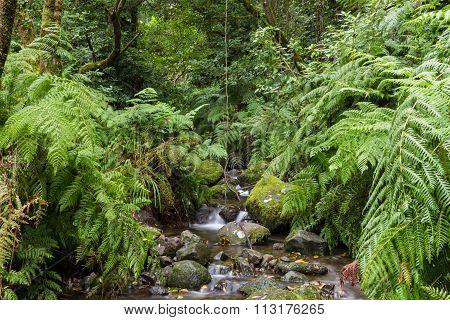 Creek At Levada Do Rei