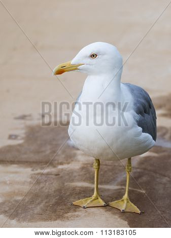 Smart Beautiful Seagull Looks