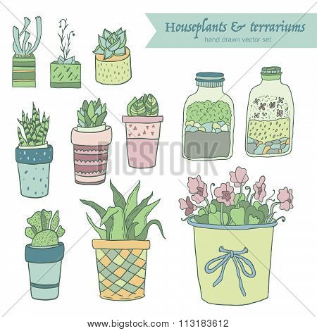 Cute hand drawn terrariums, houseplants and succulents in pots. Vector set.