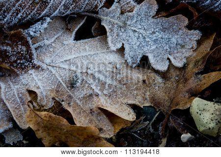 Leaf frozen