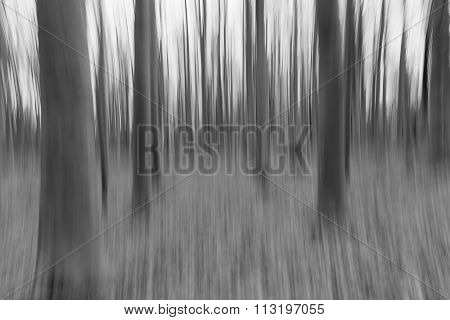 A Black And White Photo Of A Slow Shutter Speed Coloured Photo Of Trees In A Forest Showing Green An