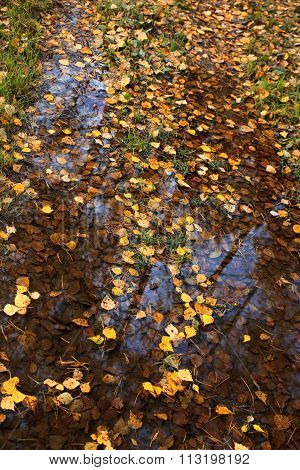 Fallen Autumn Yellow Leaves