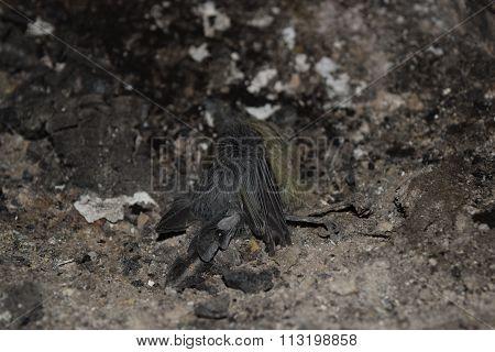 Bird died in fire of asphyxiation
