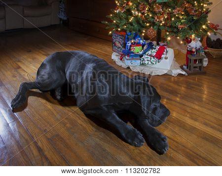 Christmas Eve Nap