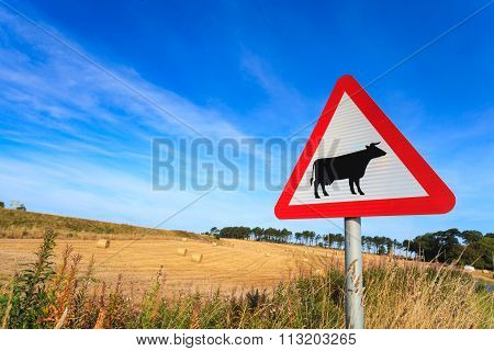 Waring Sign For Cow In  The Country Side In Aberdeen, Scotland Uk