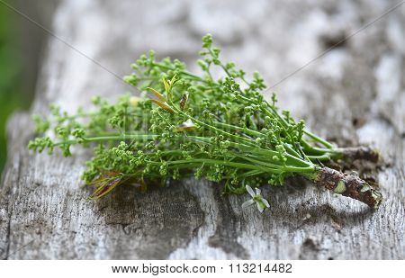 Fresh And Green Neem Plant (azadirachta Indica) On Wood Background