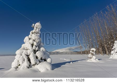 Small Tree Covered In Snow.