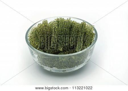 Caulerpa Lentillifera , Sea Grapes  On Isolate White Background