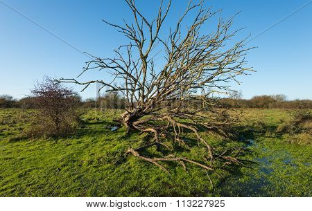 Fallen Tree With Bare Branches In A Rual Are