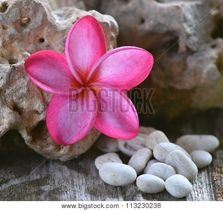 Pink Plumeria On Stones Background