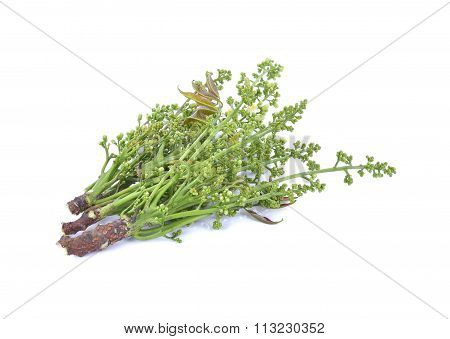 Fresh And Green Neem Plant (azadirachta Indica)