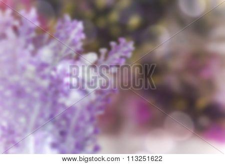 Blurry Tiny Purple Blossom Flowers Bouquet
