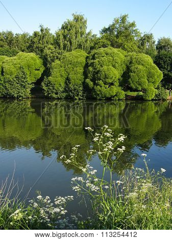 Lake And Willows, Vertical