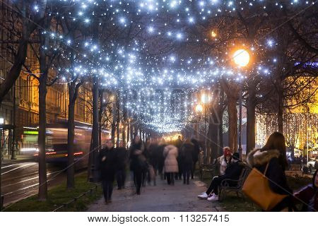 Illuminated Plane Tree Alley On Zrinjevac