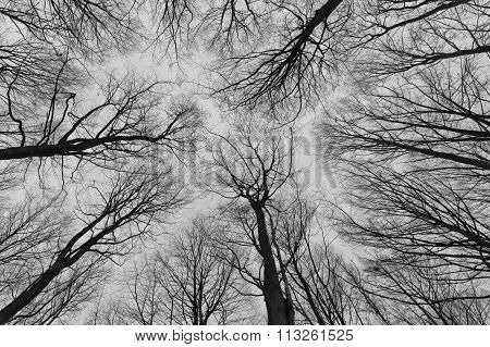 A Black And White Photo Of Trees In A Forest With A Perspective Of Looking Up Into The Sky And Isola