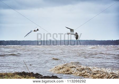 Two a seagulls.