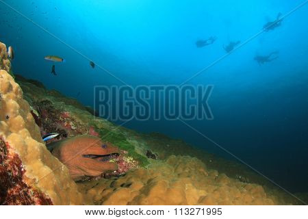 Moray Eel and scuba divers