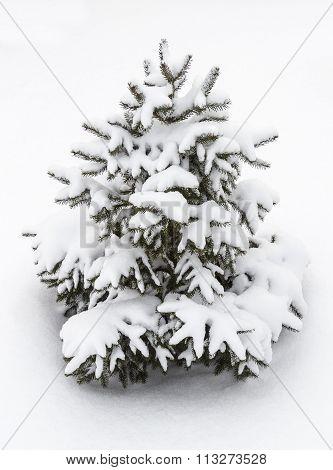 Small Decorative Tree In The Snow