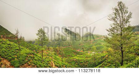 Tea plantations near Nuwara Eliya. Sri Lanka. Panorama
