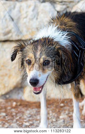 Wet Dog Similing