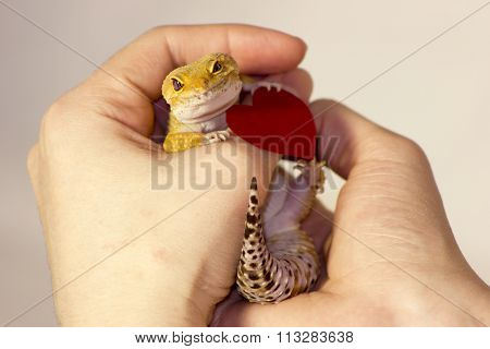 Cute Gecko With Heart In Paws