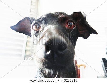 Focinho de um cachoro