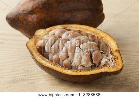 Cacao fruit and  raw cocao beans in the pod close up