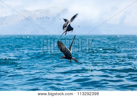 birds to hunt for fish in the ocean
