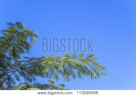 Branch With Green Foliage Separately Against The Sky