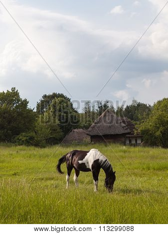 The Horse Grazing On The Meadow