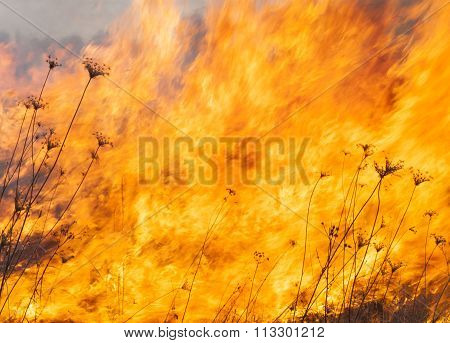 Big Fire In The Field