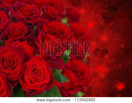 scarlet roses  on dark background