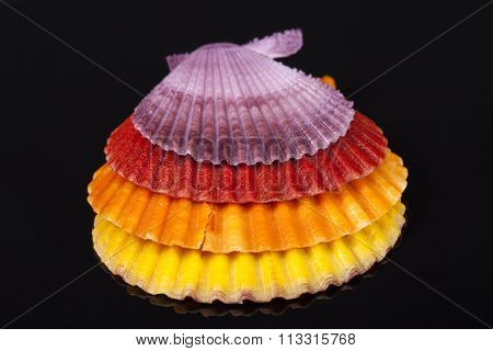 Some Colorful Sea Shells Of Mollusks Isolated On Black Background