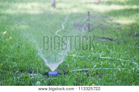 sprinkler watering the green grass