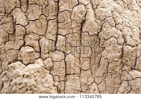 Termite Nests Background