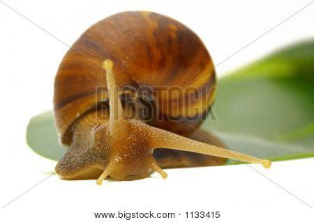 Snail-B