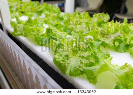 Planting hydroponics system at indoor