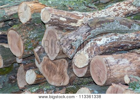 firewood collected in a heap