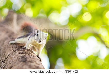cute white squirrel on the tree in nature forest