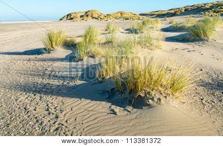 Part Of A Dune Of The North Seacoast
