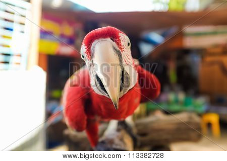 Scarlet Macaw On Wood Branch