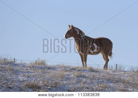 Horse in the winter